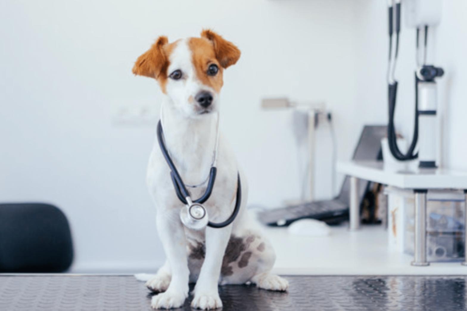 Pandemia impulsiona serviço de telerradiologia veterinária no Brasil
